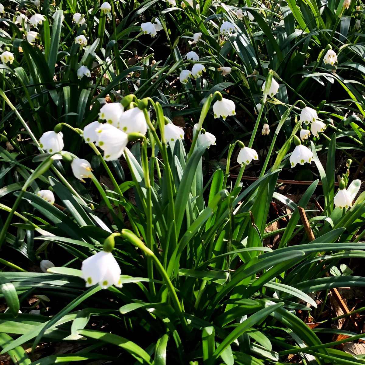 Raus in den Frühling!